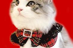 黒レース&リボン付タータンチェック丸猫服