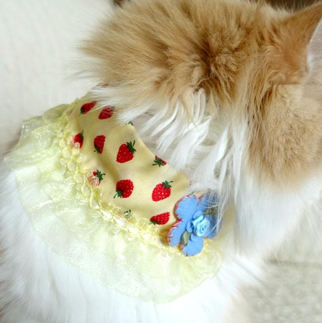 ゴロにゃんオリジナル いちご柄レース付き猫服