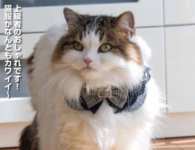 黒レース&リボン付グレンチェック丸猫服