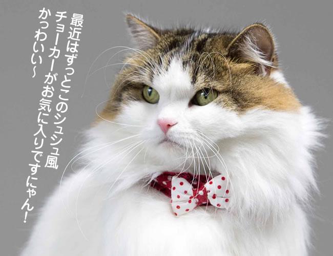 モテ猫決定!シュシュ風デイリーおしゃれ猫チョーカ