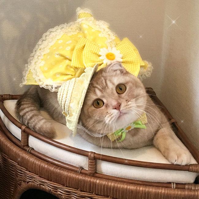 陽だまり マーガレットドレスと麦わら帽子セット