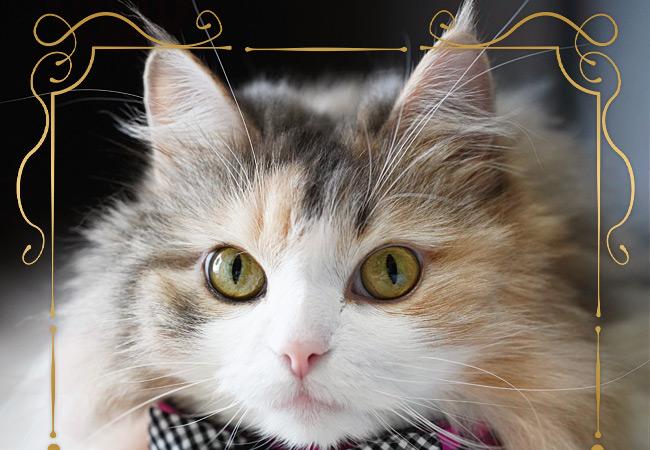 猫服チェッカーフリルリボン