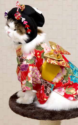 おもしろ猫用かつら 文金高島田