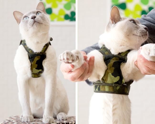 猫のハーネス ゴロにゃんオリジナル ダブルブロック猫用ハーネス アニマル 猫ハーネスを着用したモデル猫