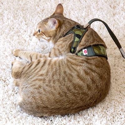 猫のハーネス ゴロにゃんオリジナル ダブルブロック猫用ハーネス アニマル 猫用品専門店が考えた猫のための猫専用ハーネス