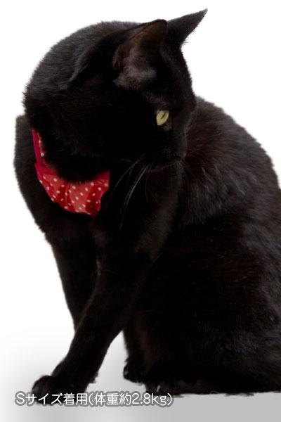 ゴロにゃん オリジナル猫用ハーネス ダブルブロックタイプ[特許取得済] 猫ハーネス着用画像
