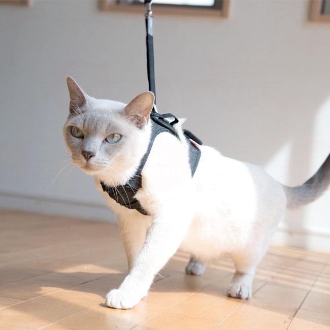 猫 ハーネス ゴロにゃんオリジナル猫用ハーネス ダブルブロックタイプ