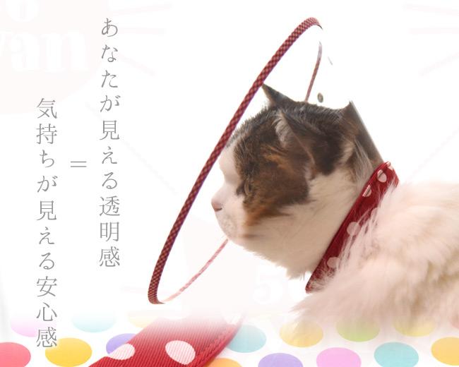 猫用エリザベスカラー クリアライフ ゴロにゃんオリジナルエリザベスカラー