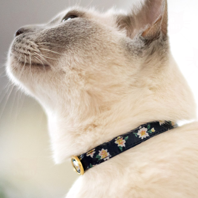 デイリー猫用首輪EX ロココ風 小花柄 ラミネート