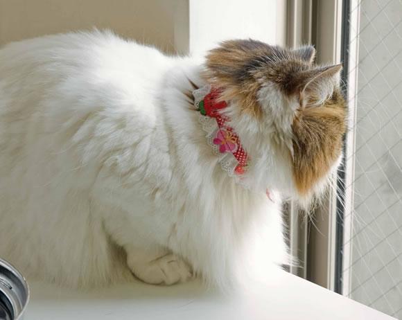 ワッペンちょこフリおしゃれ猫首輪Mサイズのりものチーム(マリーンヨット 22108-022)