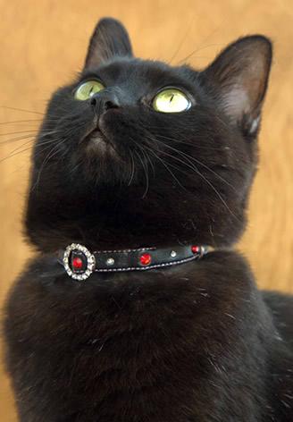スワロdeセレブ!キラリとおしゃれな猫首輪