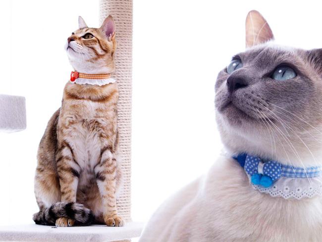 ちょこフリにチョウチョがとまった猫首輪