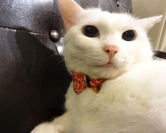 おしゃれリボン猫首輪 一歩先行くリボンコーデシリーズ 雲柄リボン