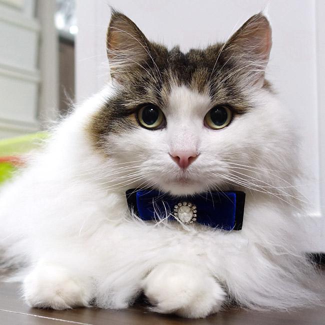 豪華ベルベット蝶ネクタイおしゃれ猫首輪 クリスタルビジューつき