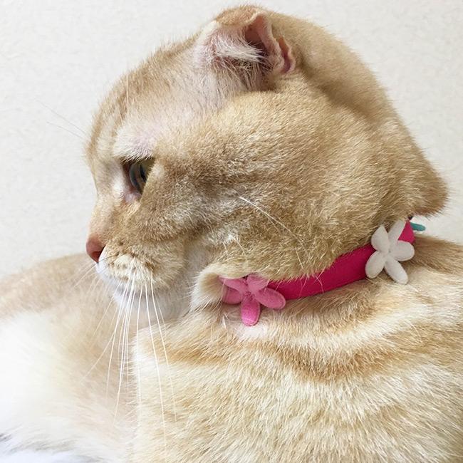 ゴロにゃんオリジナルおしゃれ猫首輪 プクプクフラワー