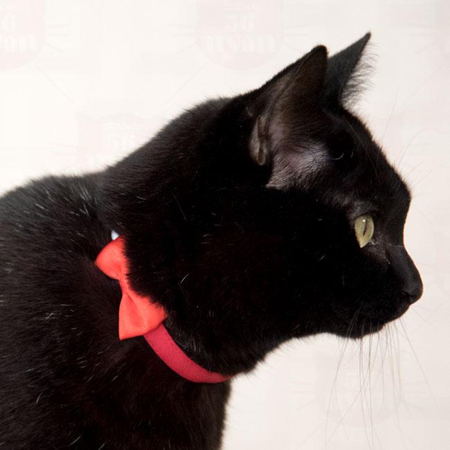 デイリー猫首輪DX 蓄光バックル 無地タイプ