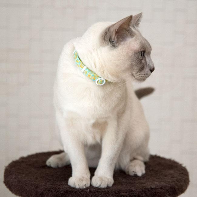 デイリー猫首輪DX 蓄光バックル フラワーキャンバス