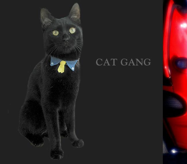ちょこタイ猫ギャング首輪