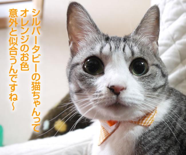 ちょこえり猫首輪 2重三角えりギンガムチェックシリーズ