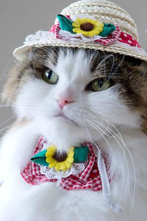 ★『セット販売』ちょこえり猫首輪ひまわり畑Mサイズと麦わら猫帽子のセット(レッド)