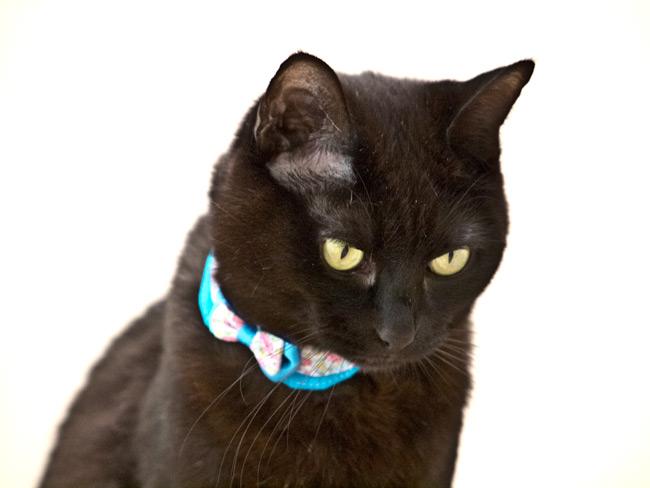 もっとちょこえり猫首輪(フラワーブーケ)