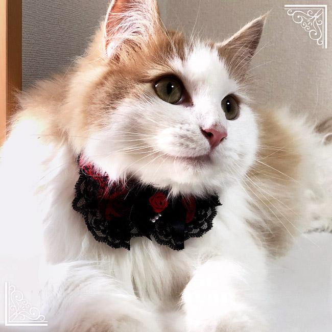 ゴロにゃんオリジナルちょこえり猫用首輪 ゴスロリ情熱ローズ