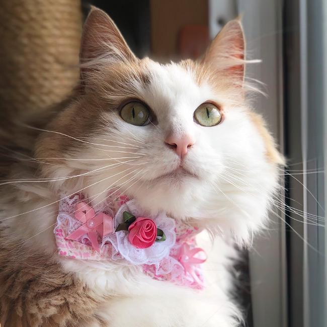 デカちょこ猫首輪 ファンタジーフラワー