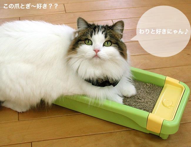 とぎ 猫 つめ