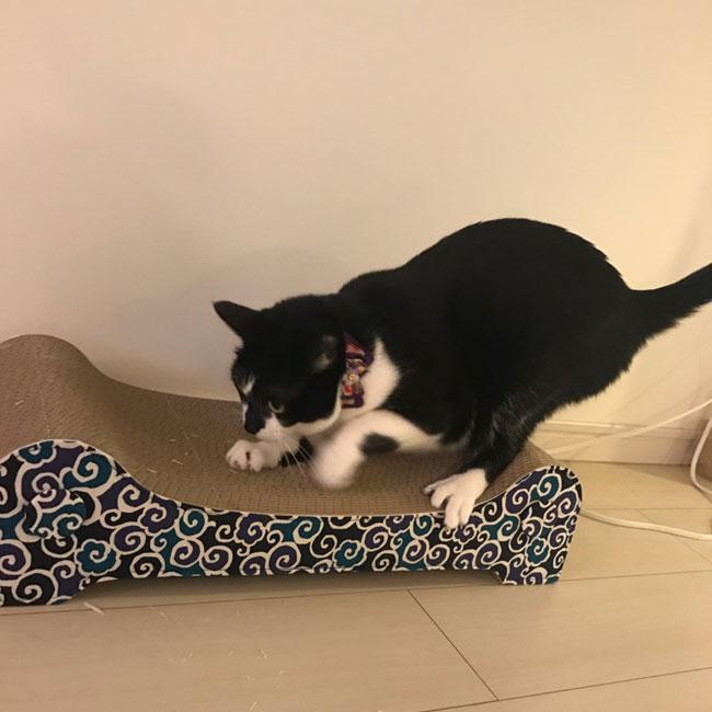 ゴロにゃんオリジナル猫用爪とぎ キャットライドシリーズ コーディネイトソファ 和柄