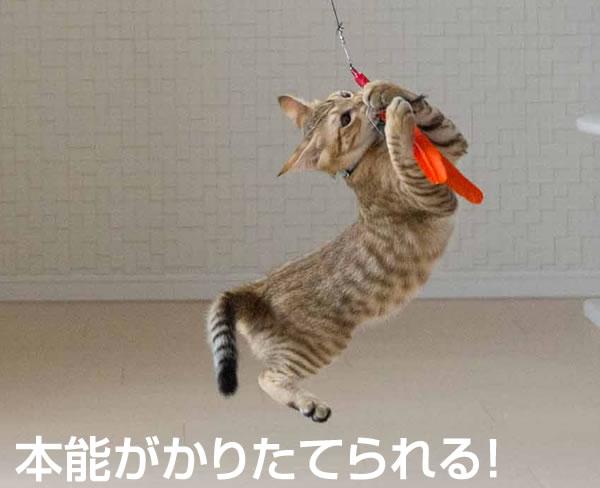 世界で一番売れている?!猫が夢中になりすぎる〜ダ・バード(羽根のお色はおまかせ下さい)