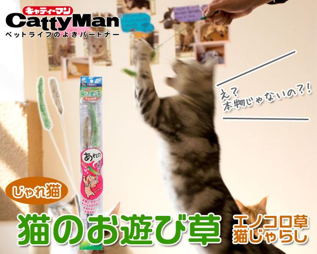 じゃれ猫猫のお遊び草エノコロ草猫じゃらし
