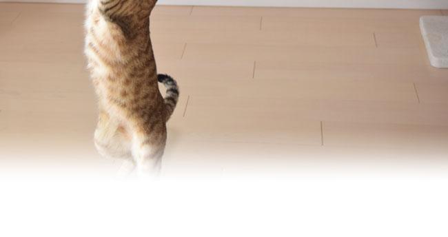 じゃれ猫 天然羊毛じゃらし