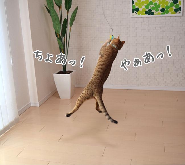じゃれ猫 猫のお好みじゃらし