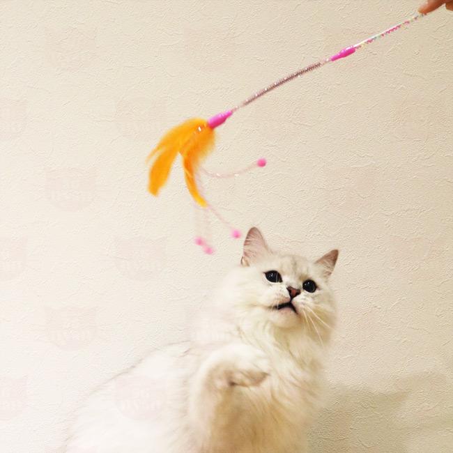 キャティーマン じゃれ猫 コイルでサンバ