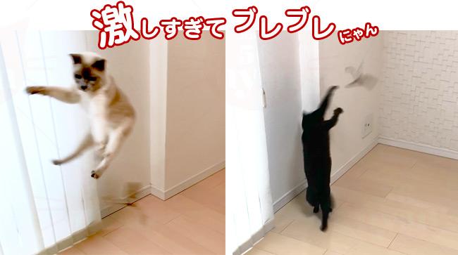 ダ・パーペラー 猫じゃらし