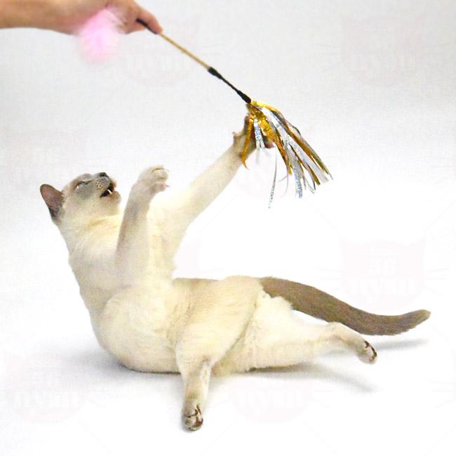 キャティーマン じゃれ猫 キャティーパーティー きらフワ Wじゃらし