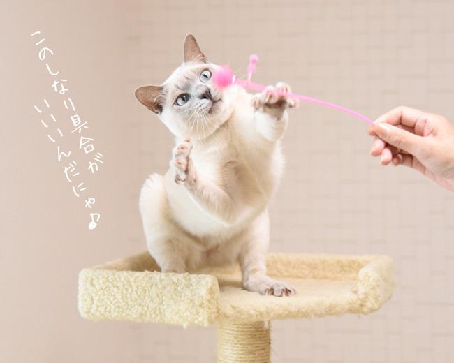 ゴロにゃんオリジナル とにかくたのしいラメ棒バラエティー3本セット 【猫用品 ペットグッズ 猫用 おもちゃ じゃらし】