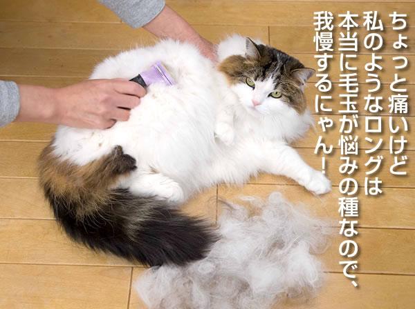 ファーミネーターごっそり抜け毛が除去できます。小型猫
