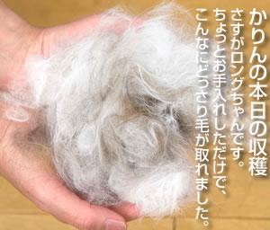 かりん被毛