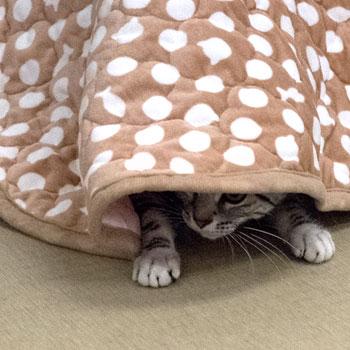秋冬用 猫用ベッド ラウンドベッド