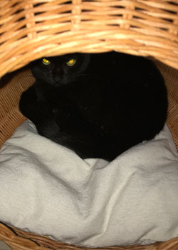 猫用ベッド シンシアジャパン ラタンベッド コクーン