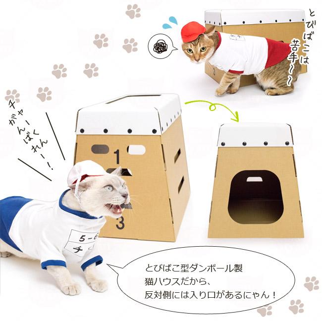ゴロにゃんオリジナル猫服 体操服と赤白帽セット