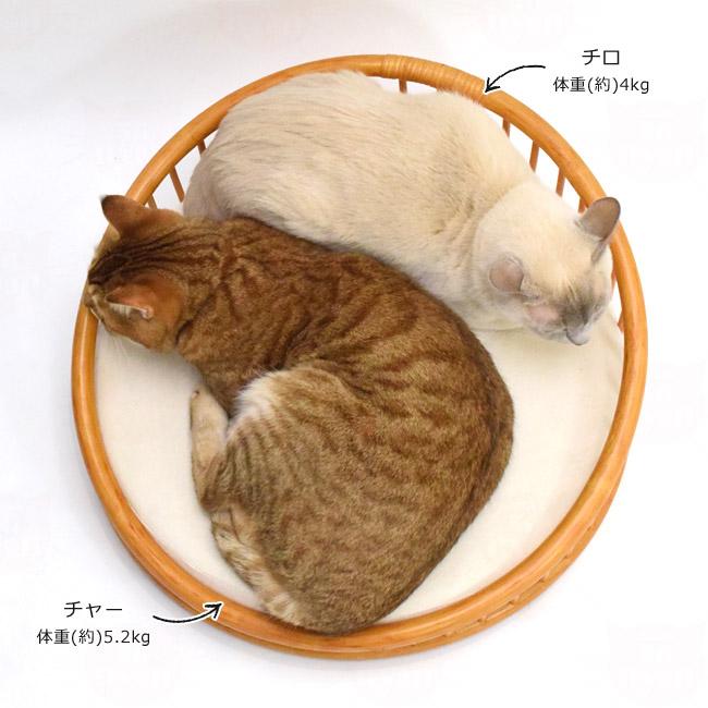 シンシアジャパン ラタンテーパードベッド カラー