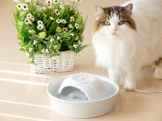 ネイチャーズファウンテンセラミック 陶器製フィルター循環式ペット用給水器