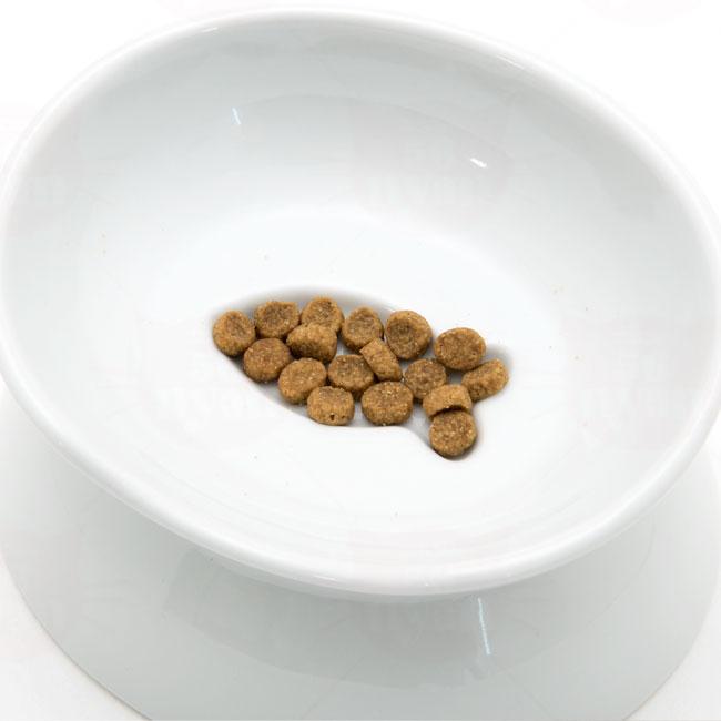 ハリオ にゃんプレ ダブル 猫用食器
