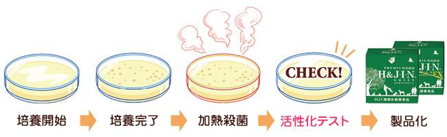 培養開始→培養完了→加熱殺菌→活性化テスト→製品化