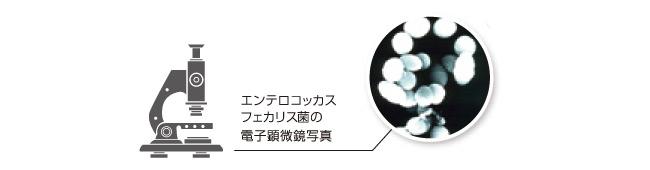 加熱処理乳酸菌素材「FK-23TM」