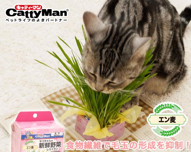 ネコちゃんの新鮮野菜レストラン2P