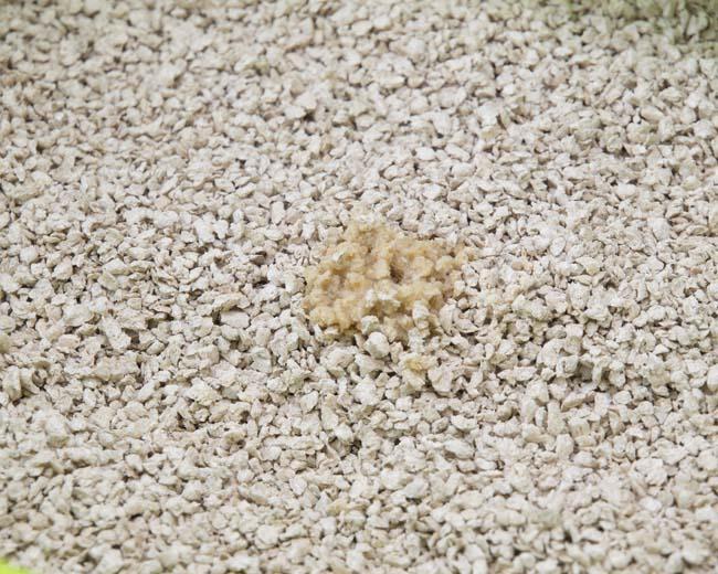 脅威の消臭力!ドイツ生まれの猫砂 キャッツベスト