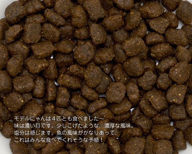 LEONARD レオナルド 子猫用ドライフード キトン 400g